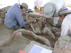 mammoth dig in Kansas