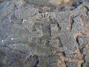 Petroglyph on North Shore of Oahu, Hawaii